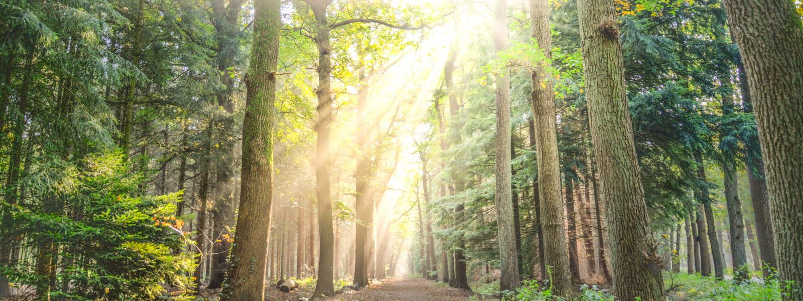 soleil perçant la forêt