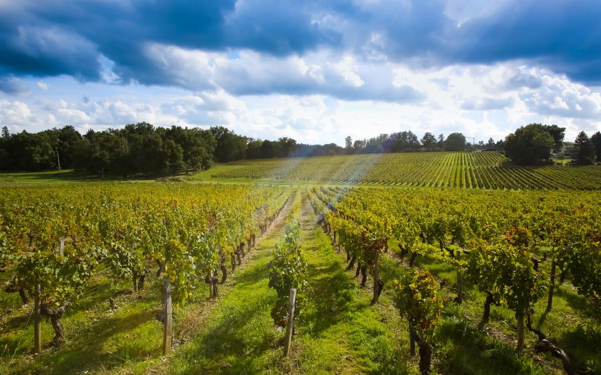 Paysage de vignes dans le sud de la Gironde