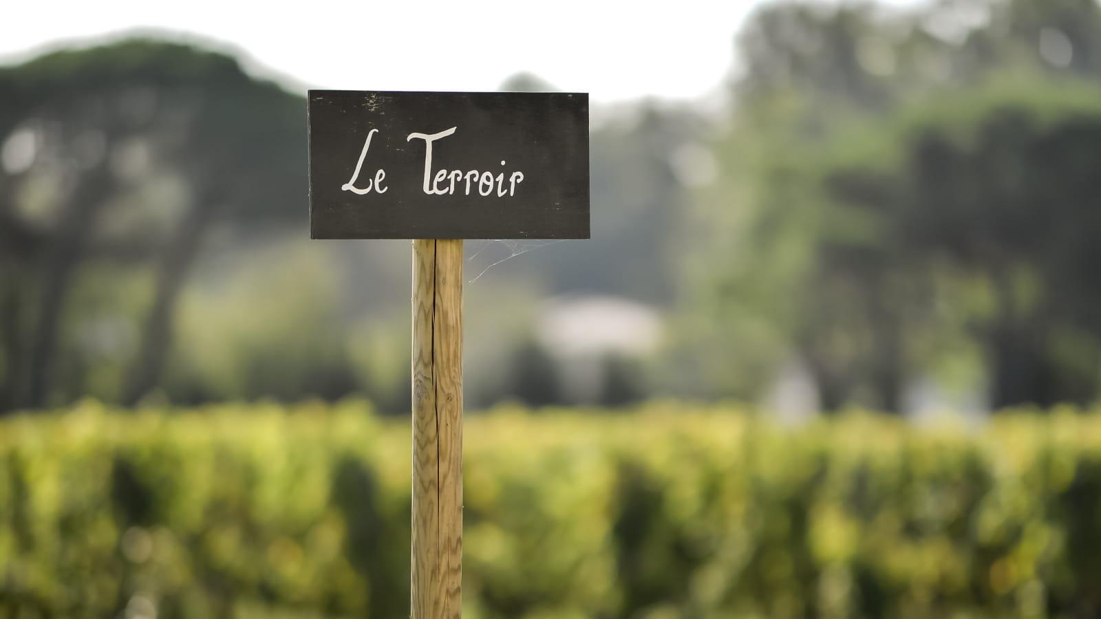 Ecrito Le Terroir en avant des vignes