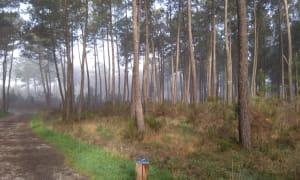 Forêt de Migelane2