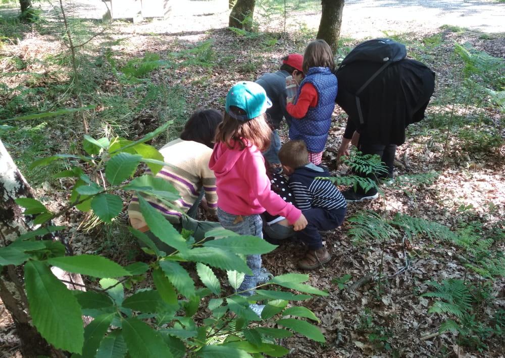 ateliers de la forêt