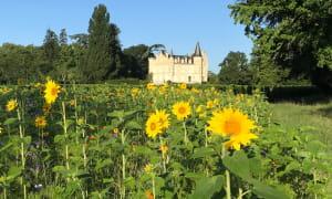 Pique-nique parc château2 (1)